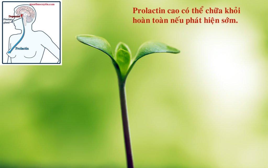 Prolactin cao có nguy hiểm không, prolactin cao có chữa được không