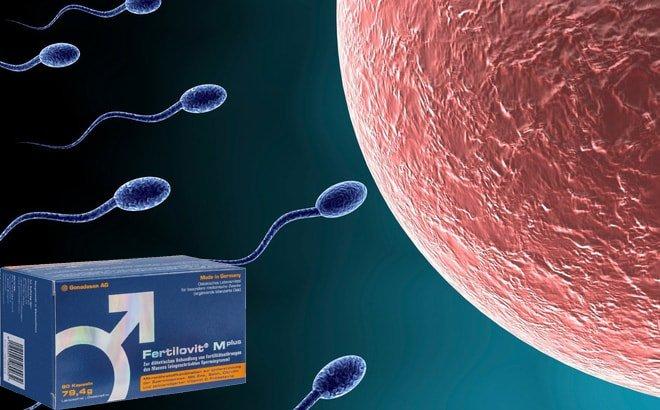 Tác dụng của thuốc Fertilovit Mplus tăng số lượng và chất lượng tinh trùng.
